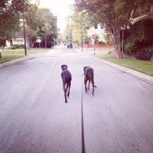 Shadow & Rylee walking (640x640)