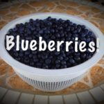 blueberries-colander-neily