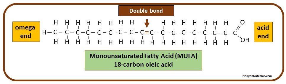 monounsaturated fatty acid